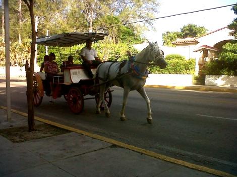 Horse and cart Varadero