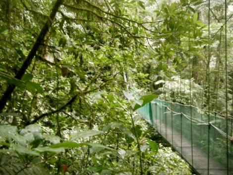 bridge costa rican jungle
