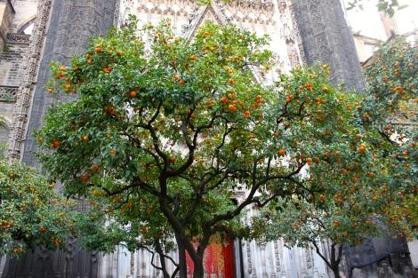 Orange Garden Seville